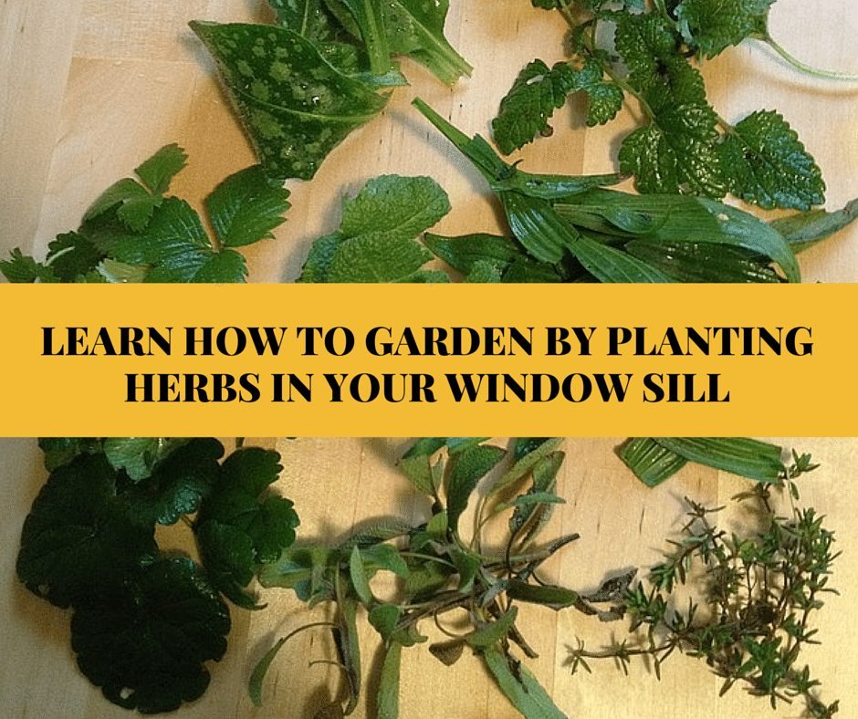 LEARN HOW TO GARDEN BY PLANTING HERBS IN (1)