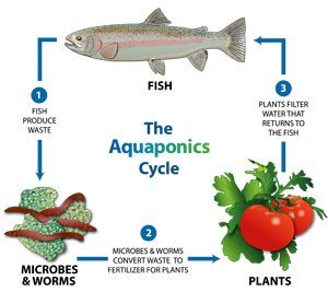 20131003142909-NEW.Aquaponics-Icon