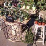 Desert Gardeners Market
