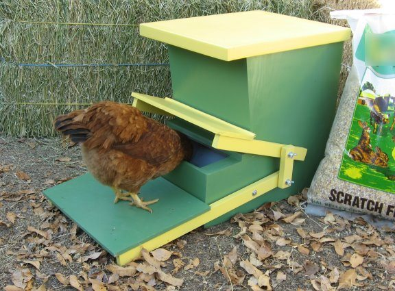 Diy chicken feeders and raising three boys homestead guru for Diy chicken feeder light
