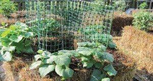 hay bale garden