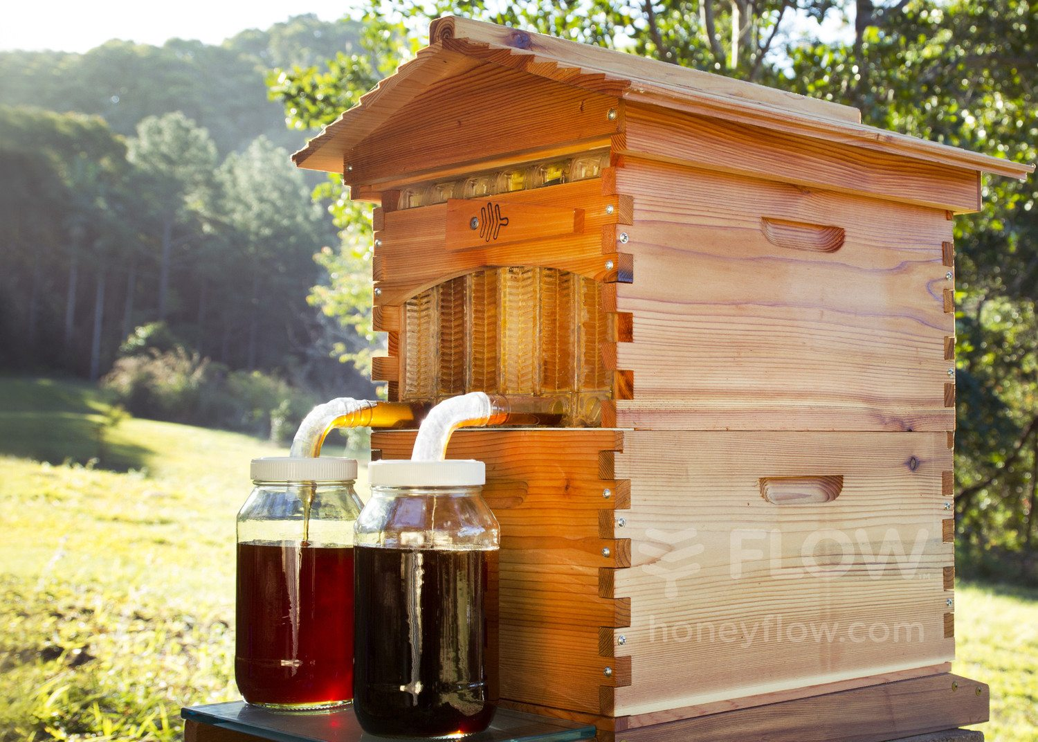 Honey On Tap Returns Controversial Bee Hive Seeks To