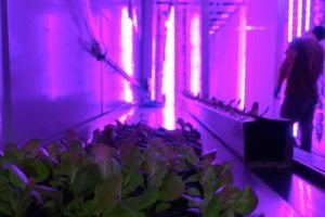 Freight-Farms-LGM-LED