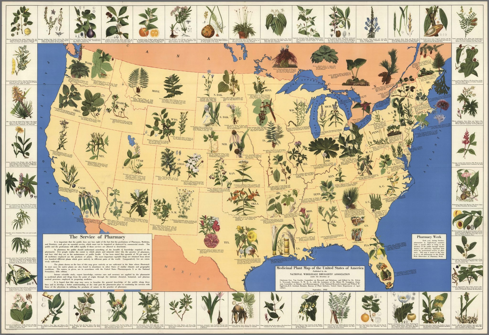 check out this amazing 1930s pharmacist map of herbal cures