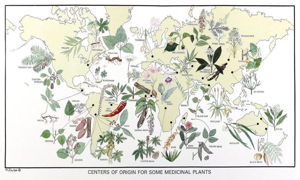 medicinal plant amazon