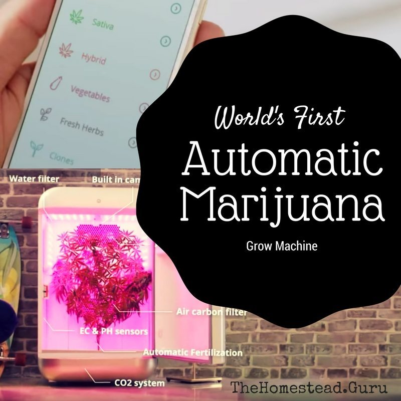 Seedo Homelab Automatic Marijuana Growing Machine