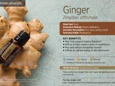 ginger esential oil doterra