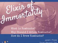 how to brew kombucha