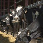 milk lawsuit