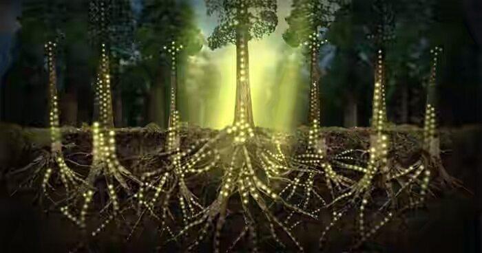 plants communicate mycelium