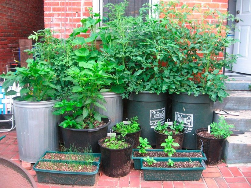 No yard no problem how to garden in a small space for Container gardening