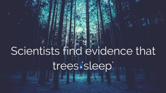 trees sleep
