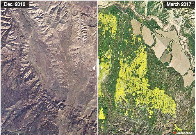 Wildflowers north of Los Padres National Forest in early December 2016 (before the winter rains) and in late March during the wildflower super bloom. (Images provided by Planet Labs)