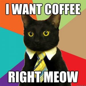 coffee-cat-shit