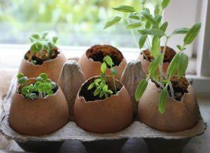 eggshell seeds