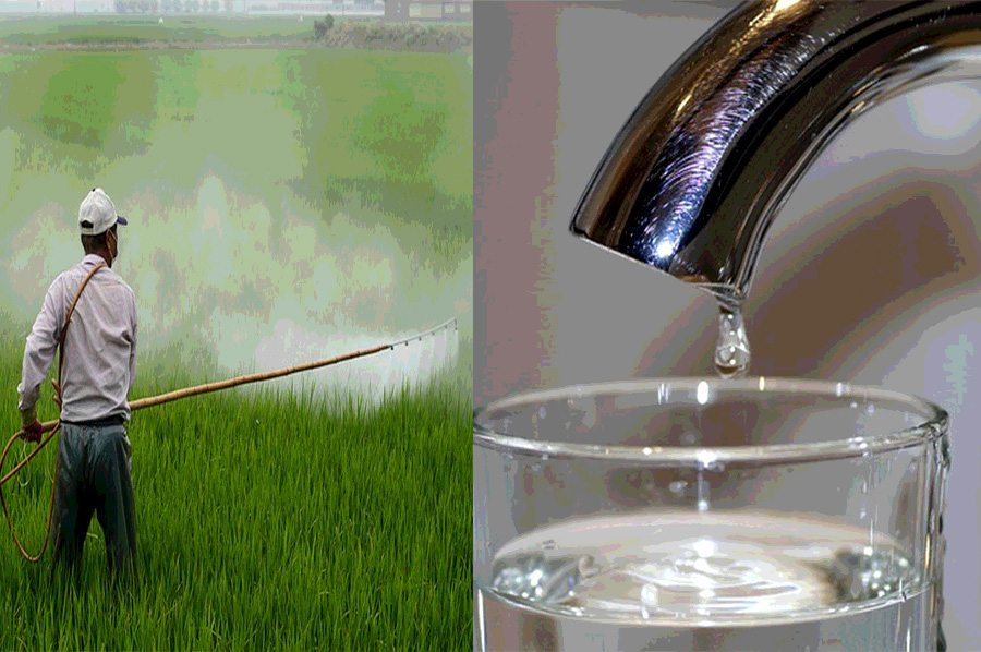 pesticides tap water bees neonictinoids