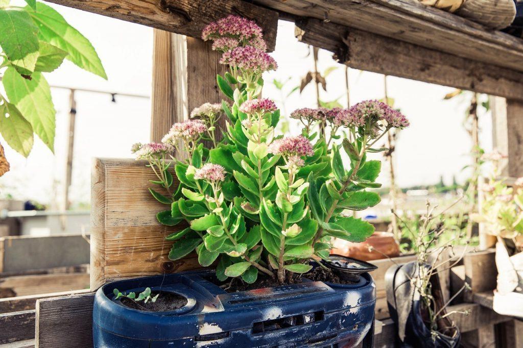 urban-gardening-1679950_1280