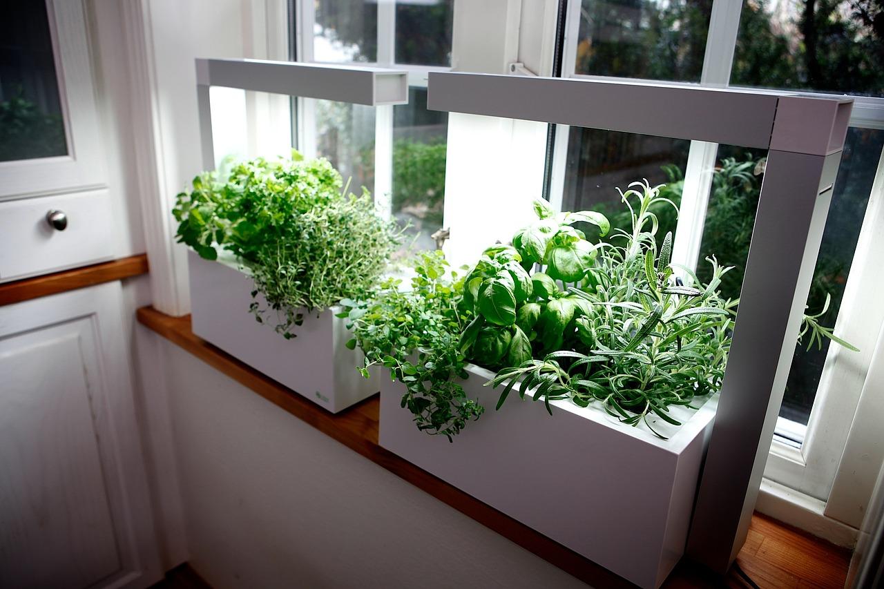 No Sun No Problem 10 Shade Tolerant Herbs ⋆ Hg