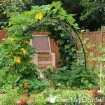 squash arch