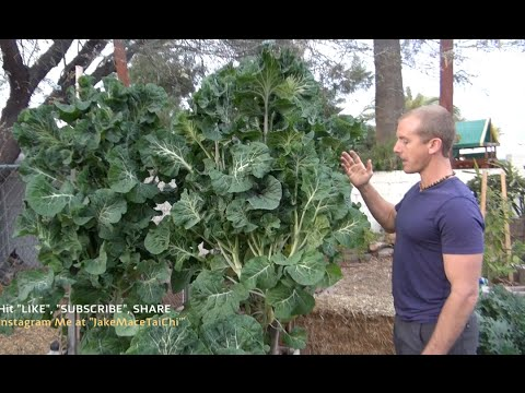 perennial veggies gardening food