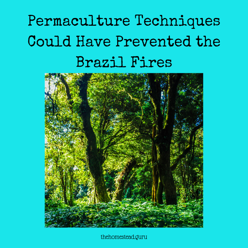 permaculture brazil fires