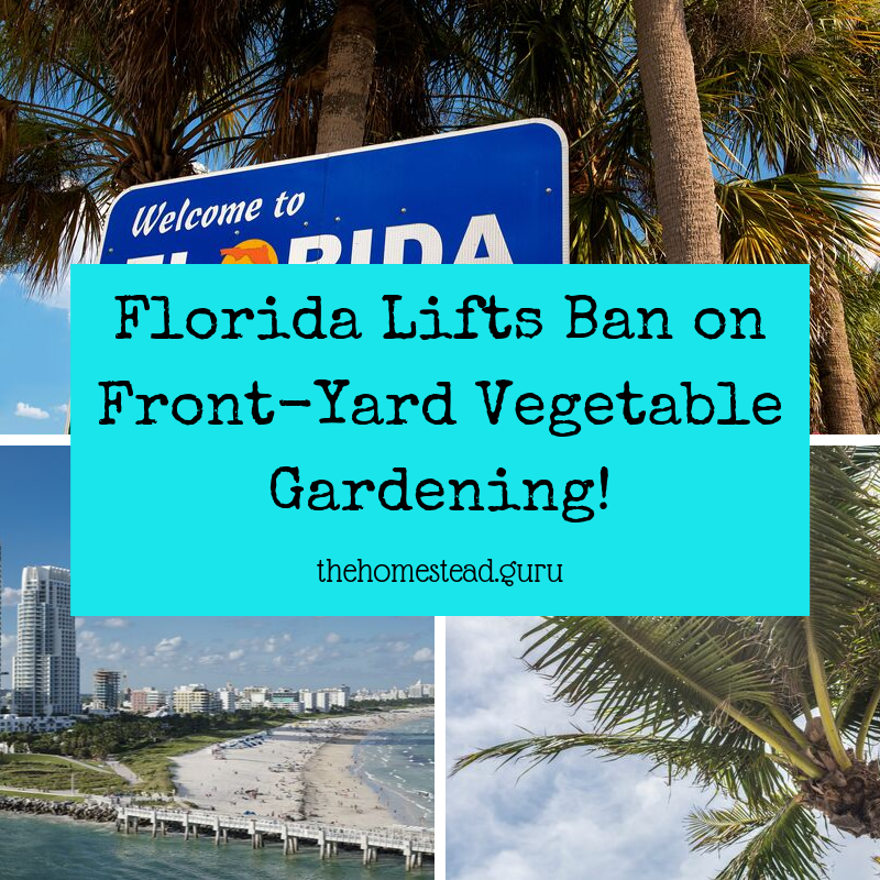 Florida Lifts Ban