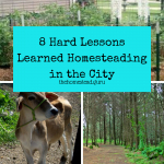 homesteading in the city