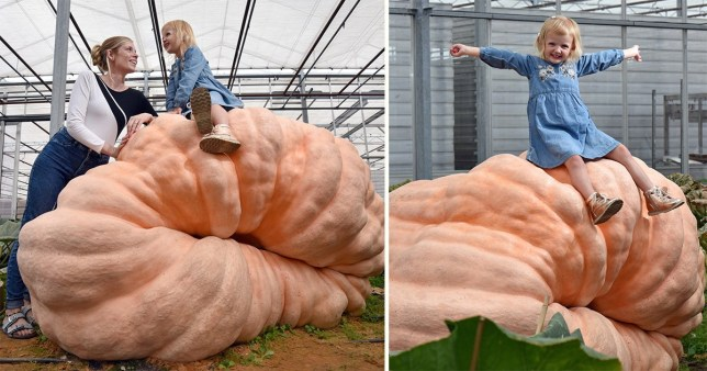 Giant Pumpkins