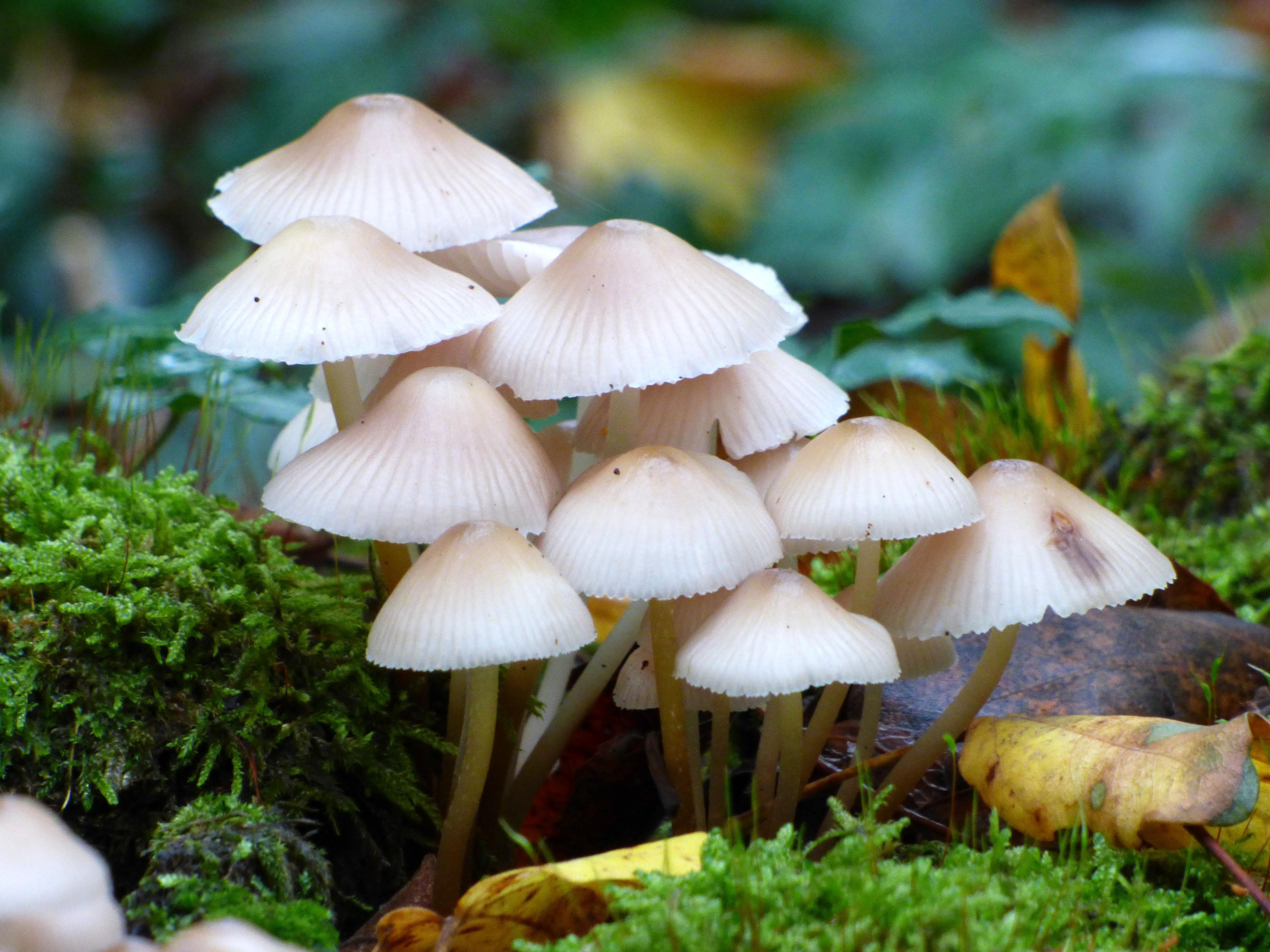 mushroom foam