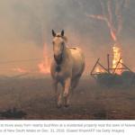 Australia wildfire horse
