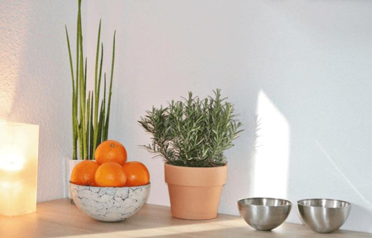 orange rosemary